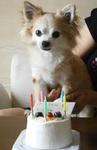 2013_meru_birthday_02.jpg